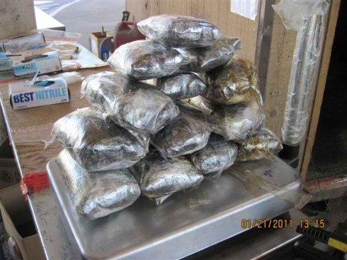 Law enforcement seize hundreds of pounds of illegal drugs