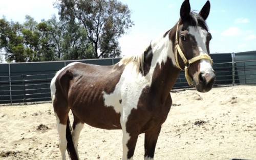 County Animal Services Investigates Horse Death, Seizes 10 Horses