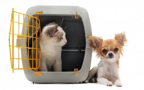 Dept. Of Animal Service Offers $10 Microchipping For Pets