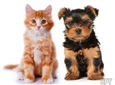 Tips For New Pet Parents