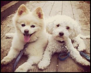 San Diego Humane Society, SPCA Seek Photo Of Pets For Fundraising Calendar