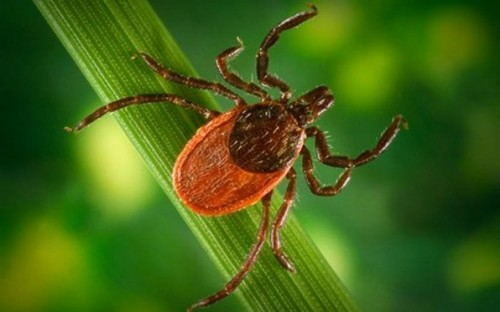 A tick monitored