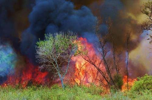 When To Evacuate Residents During A Wildfire