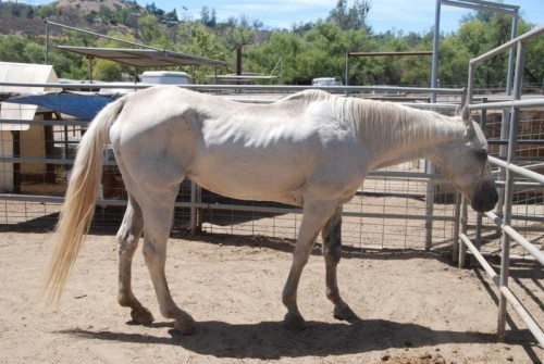 Groups Find Shelter For Two Abandoned Horses