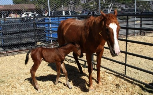 Rescued horses will be up for adoption this weekend.