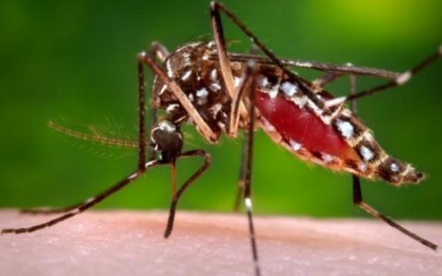 New Evidence Supports Biological Link Between Zika Infection, Guillain-Barré Syndrome