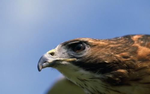 Four Dead Birds Test Positive For West Nile Virus