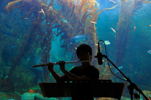 Birch Aquarium at Scripps kicks off its third annual musical program Immersion at  the aquarium.