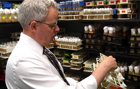 Paul Shaw, PhD, who studies sleep in fruit flies at Washington University School of Medicine in St. Louis, checks the nursery where he breeds flies. His research shows that artificially inducing extra sleep in the flies allows them to overcome major memory impairments.