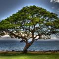 """Robert Kaler's """"Tree of Life"""" image."""