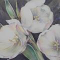 Trio Blanca Watercolor.