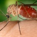 Second Person Dies From West Nile Virus