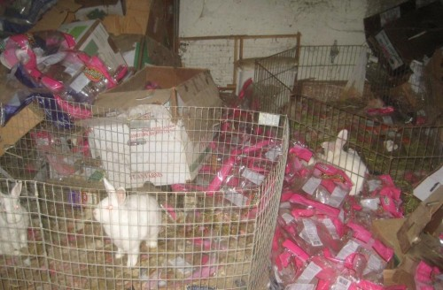 53 Rabbits Rescued From Hoarder Home