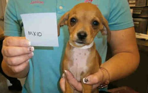 Puppies, Dogs Rescued At San Ysidro Border Crossing