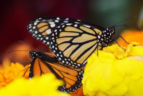Butterflies Debut At San Diego County Fair