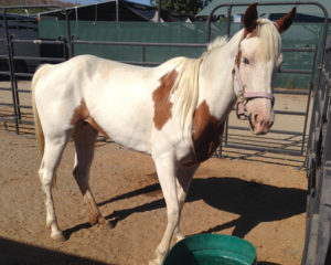 Animal Services Seize Four Horses From Owner