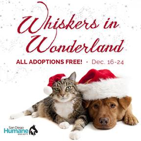 San Diego Humane Society Launch 'Whiskers In Wonderland' Adoption
