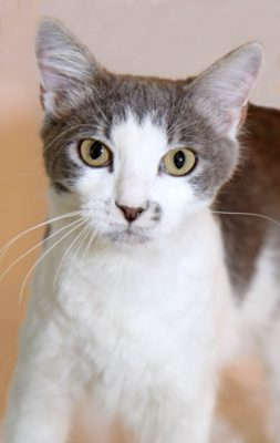 Pet Of The Week: Lilac
