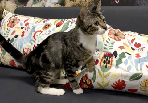 Abused Cat Ready For Forever Home