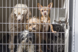 53 Dogs Seized From Jamul Home