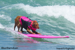 Surfing Dog Raises Millions Of Dollars For Charity