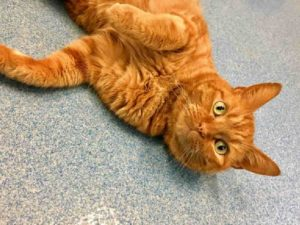 Pet Of The Week: Valentino