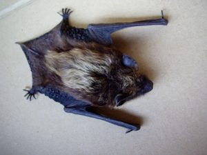 Bat Found Inside Safari Park Tests Positive For Rabies
