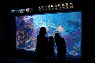 Research In Action: New Exhibit at Birch Aquarium