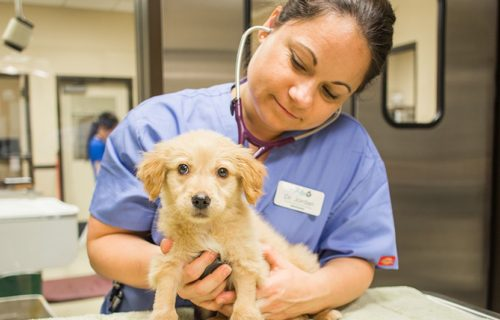 San Diego Humane Society's Day of Giving Waives Adoption Fees