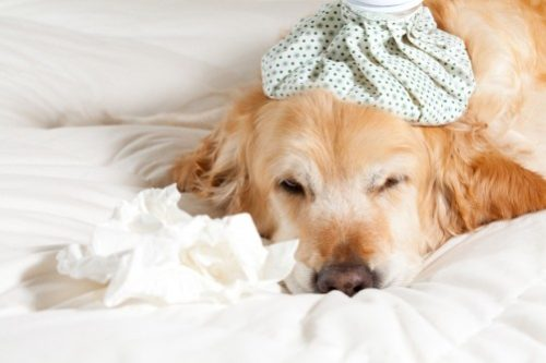 Protect Your Pet From Canine Influenza