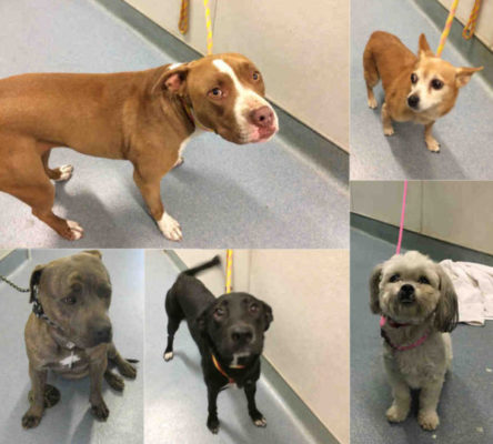 Dogs Still Unclaimed By Owners At County Shelters
