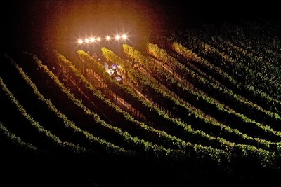 Report Issued On California Wine Harvest