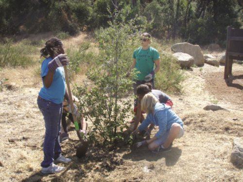 County Board Approves $2 Million Tree-Planting Program