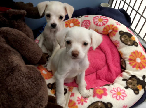 Puppies Found Dumped In Trash Can