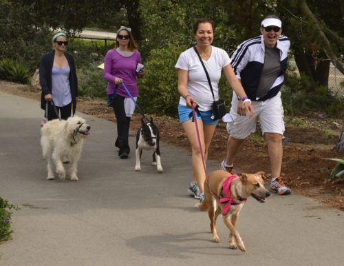 Humane Society Walk For Animals