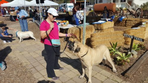 Dog Owners Stroll San Diego Botanic Garden For Charity