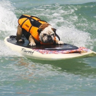 13th Annual Imperial Beach Surf Dog Competition