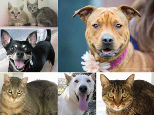 Free Pet Adoptions For Clear The Shelters