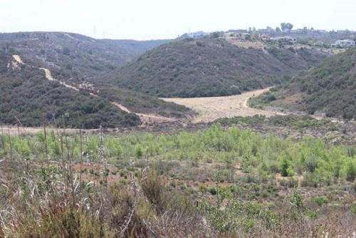 SANDAG To Preserve Nearly 112 Acres Of Habitat In Carmel Valley